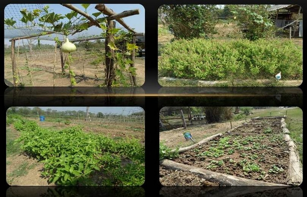 farmland_05